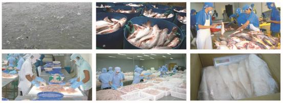 越南进口巴沙鱼